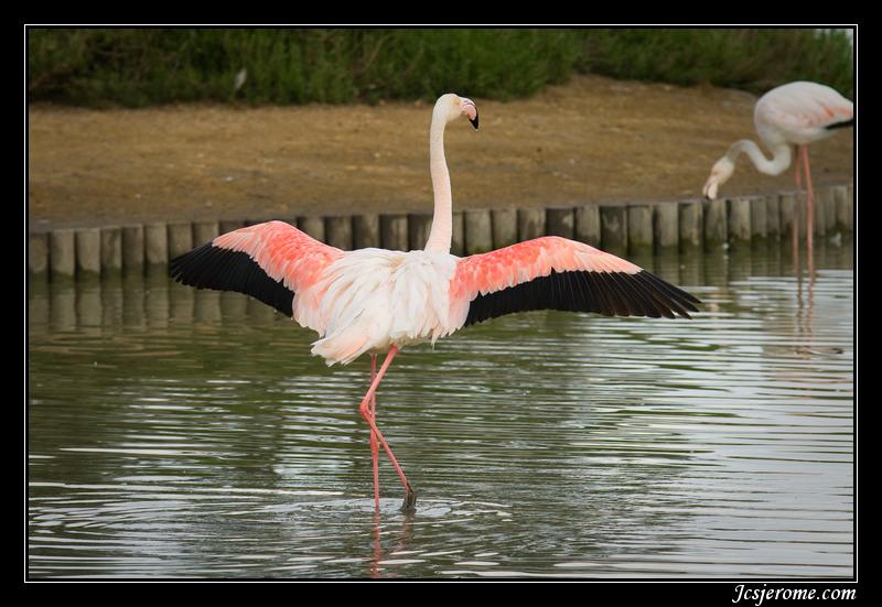 Pont de gau camargue - Flamant rose camargue ...